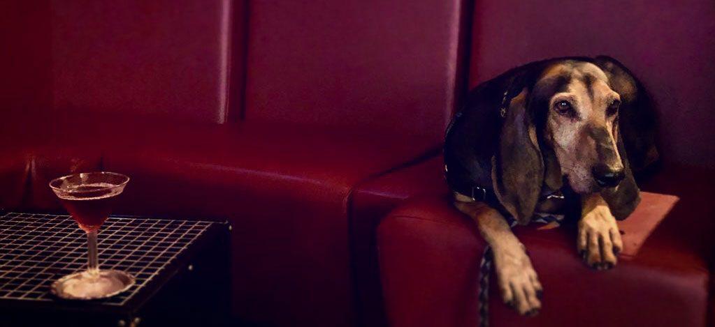 Dog at Cocktail bar